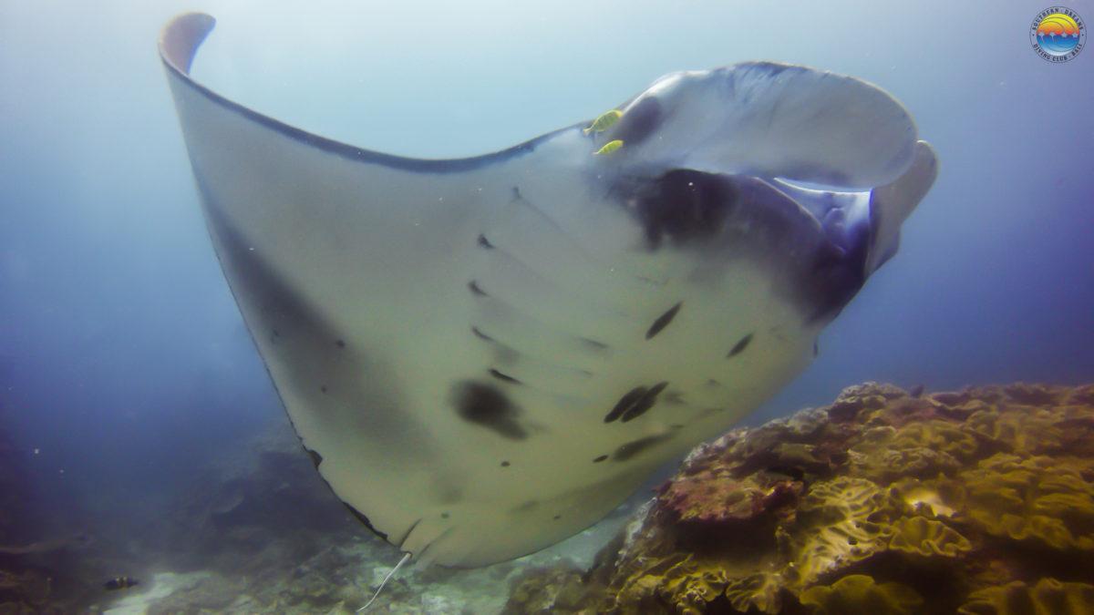 plongée Bali Nusa Penida