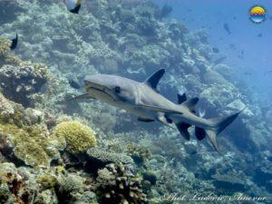 plongée Bali Candidasa