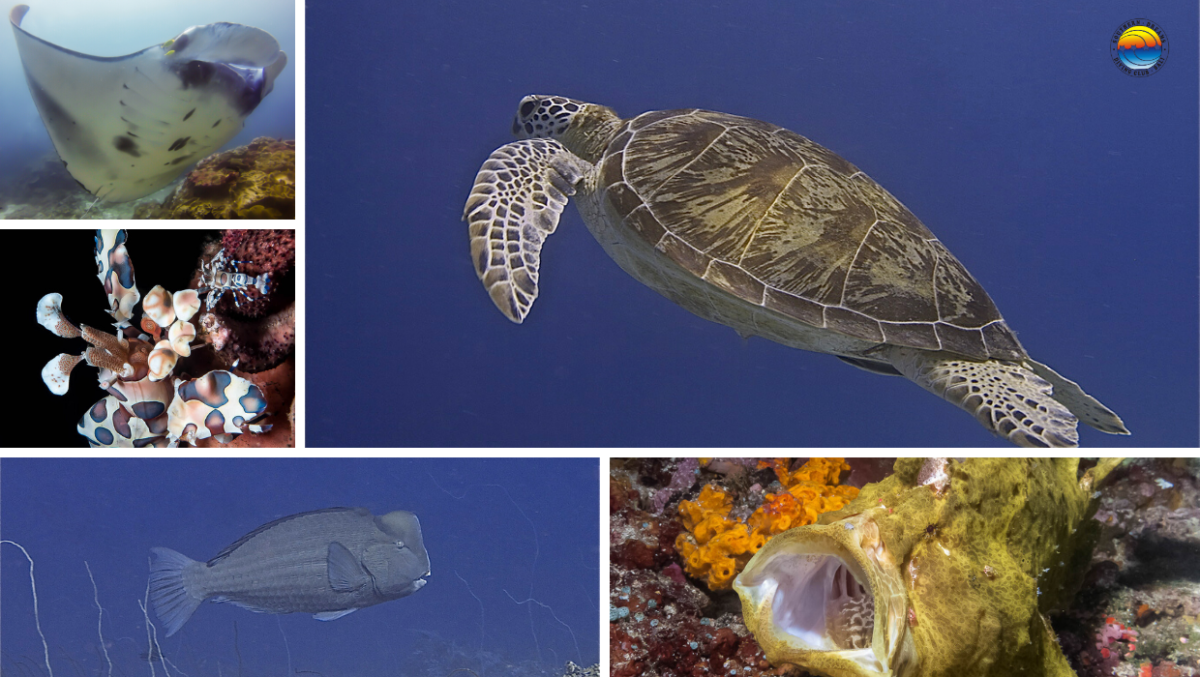 la vie marine de Bali
