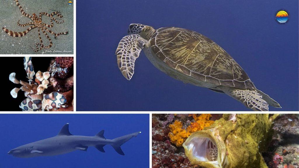 la-vie-marine-de-Bali
