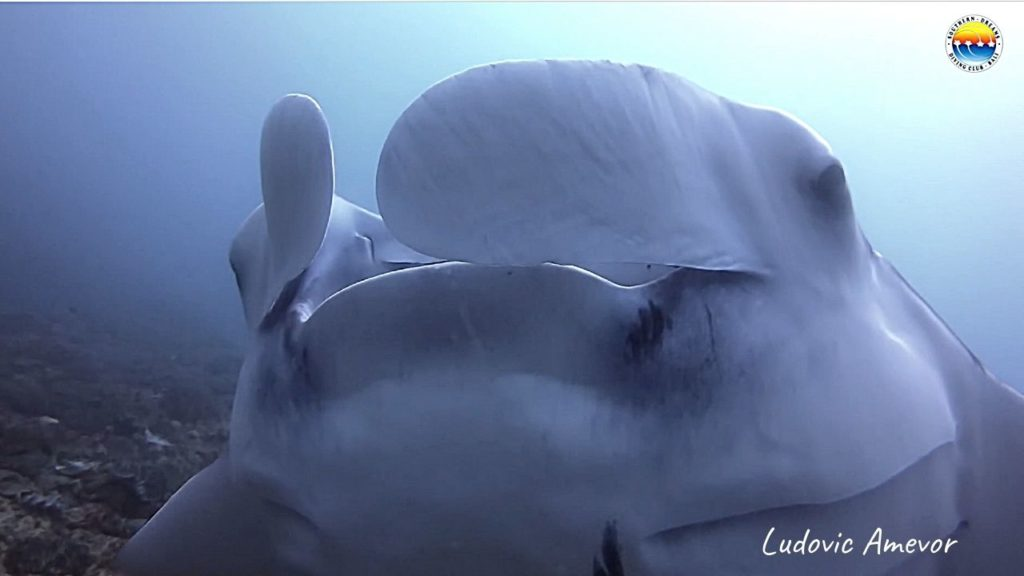 bali-plongée-sous-marine-raie-manta