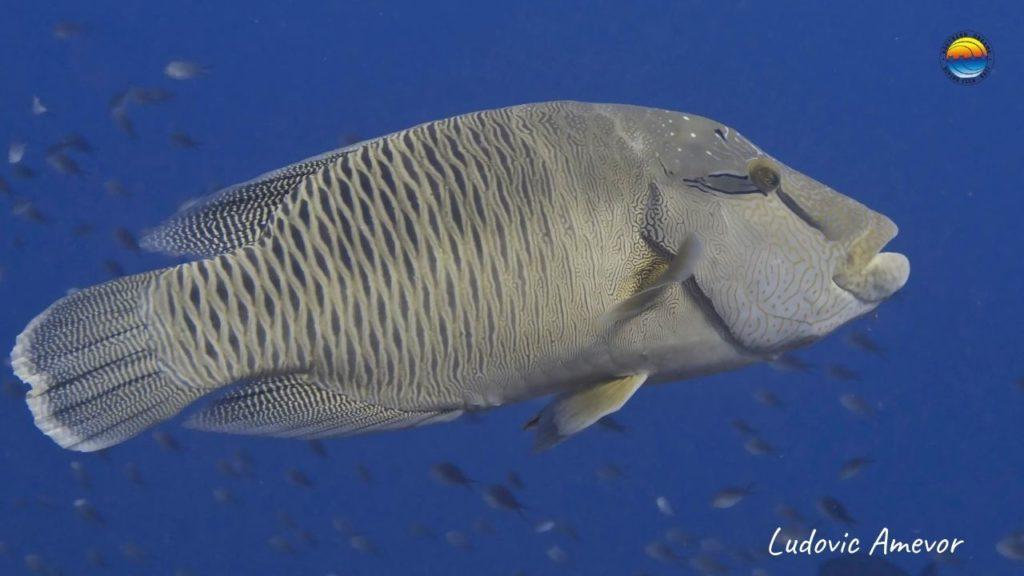 bali-plongee-sousmarine