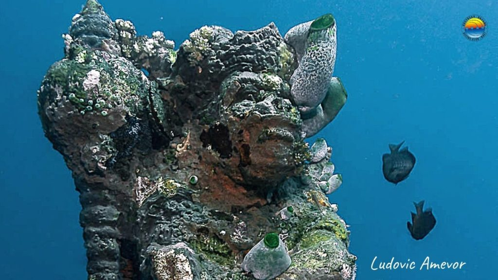 plongée-sousmarine-Bali-Amed