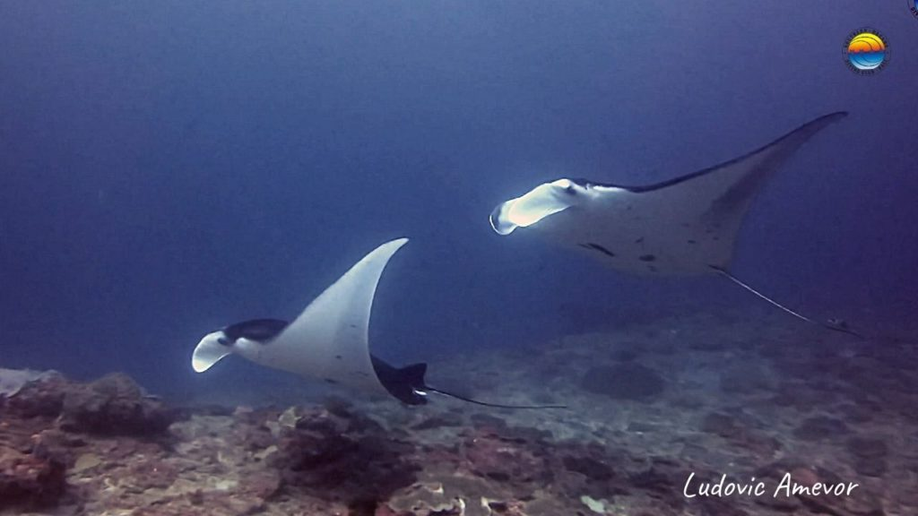 plongee-indonesia