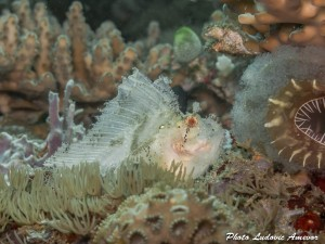 southern-dreams-diving-club-candidasa-bali-30