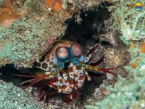 southern-dreams-diving-club-candidasa-bali-35