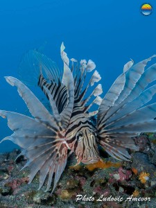 southern-dreams-diving-club-candidasa-bali-41